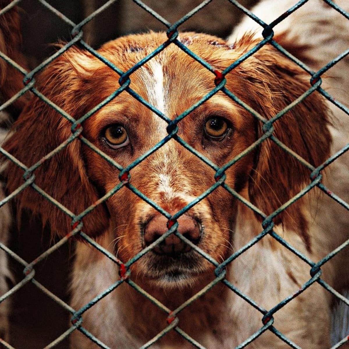 What is Animal Cruelty?